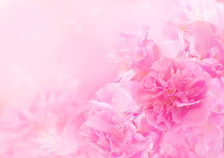 Photo pour Pink blossom background, Abstract big flower, Beautiful flower - image libre de droit
