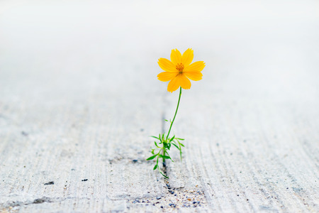 Foto de yellow flower growing on crack street, soft focus - Imagen libre de derechos