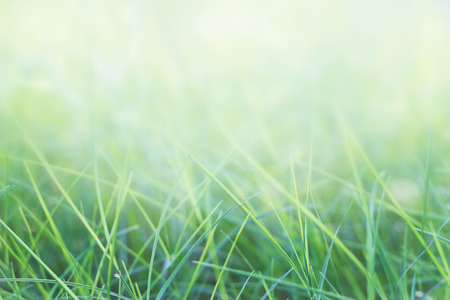 Photo pour grass and natural green background with selective focus - image libre de droit