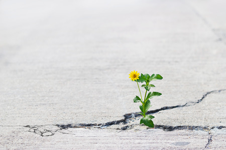 Foto de yellow flower growing on crack street, soft focus, blank text - Imagen libre de derechos