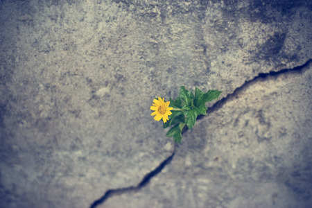 Foto de yellow flower growing on crack grunge wall, soft focus - Imagen libre de derechos