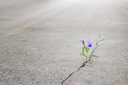 Foto de purple flower growing on crack street, soft focus, blank text - Imagen libre de derechos