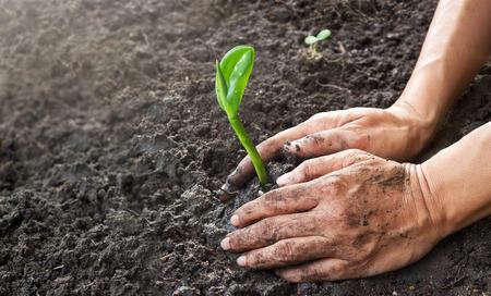 Foto de Man hands planting the young tree while working in the garden, ,Ecology concept - Imagen libre de derechos
