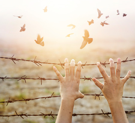 Foto de Woman hands hold the rusty sharp bare wire with hope longing for freedom among flying birds, Human rights concept - Imagen libre de derechos