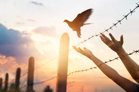 Photo for Woman hands frees the bird above a wire fence barbed - Royalty Free Image
