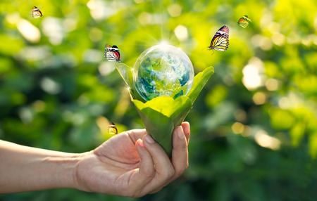 Foto de Saving energy concept, Earth day, Hand holding earth in light bulb against nature on green leaf with butterfly on green park background. - Imagen libre de derechos