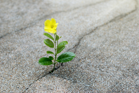 Foto de Yellow flower growing on crack street, hope concept - Imagen libre de derechos
