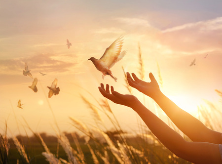 Foto de Woman praying and free bird enjoying nature on sunset background, hope concept - Imagen libre de derechos