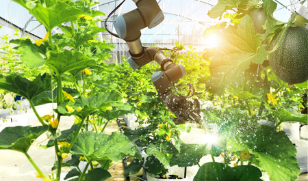 Foto de Artificial intelligence. Pollinate of fruits and vegetables with robot. Detection spray chemical. Leaf analysis and oliar fertilization. Agriculture farming technology concept. - Imagen libre de derechos