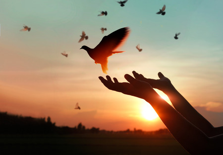 Photo for Woman praying and free bird enjoying nature on sunset background, hope concept - Royalty Free Image