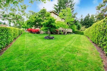 Foto de Green backyard garden with trees, trimmed hedges and blooming bushes - Imagen libre de derechos