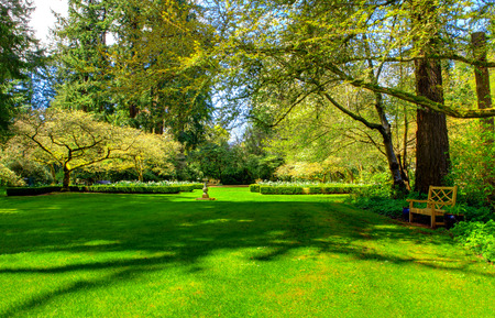 Photo for Wooden bench in a summer garden, nice green lawn - Royalty Free Image