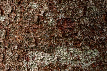 Photo for macro texture of pine bark texture - Royalty Free Image