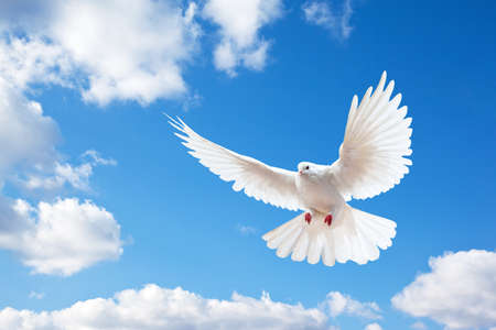 Photo pour Dove in the air with wings wide open in-front of the blue sky - image libre de droit