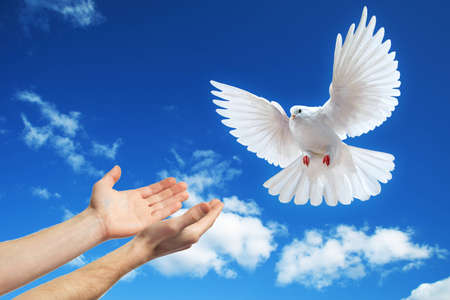 Photo for hands released into the blue sky to the sun a white dove - Royalty Free Image
