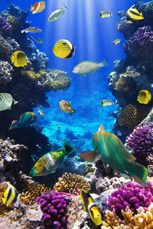 Photo for Photo of a tropical Fish on a coral reef - Royalty Free Image