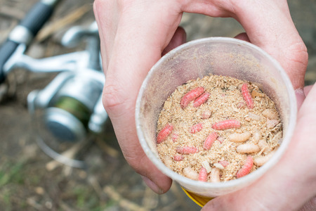 Foto de Living red and white maggots, live bait for fishing in round box in men hands against feeder reel. fishing lure maggots close up - Imagen libre de derechos