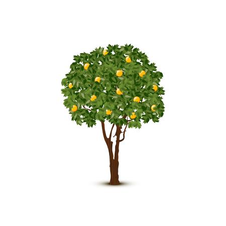 Illustration pour A Vector orange tree on white background. - image libre de droit