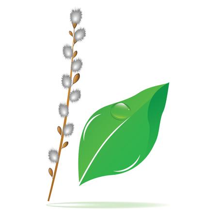 Ilustración de Willow branch, green leaf with a dew drop - isolated on white background - vector art. Spring poster. - Imagen libre de derechos