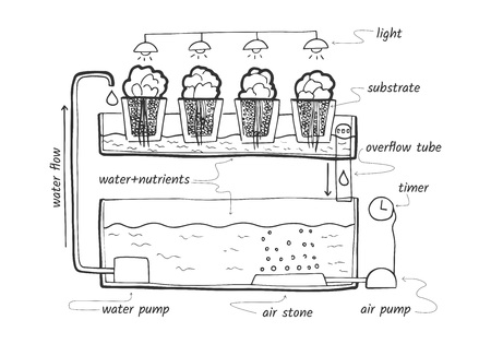 Illustration for Vector illustration sketch of ebb and flow hydroponic system for herbs and lettuce with labels. - Royalty Free Image