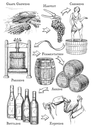 Ilustración de Vector illustration of wine making process. All stages: grape growing, harvest, crushing, pressing, fermentation, ageing, bottling, degustation, drinking. Vintage hand drawn engraving style. - Imagen libre de derechos