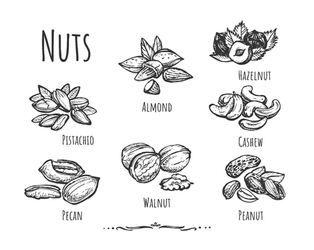 Illustration pour Vector illustration of healthy, wholesome food, snack set. Different types of peeled and crushed nuts such as pecan, walnut, peanut, pistachio, cashew, almond, hazelnut. Vintage hand drawn style. - image libre de droit
