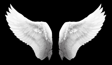 Photo for White angel wing in black color background - Royalty Free Image
