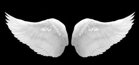 Photo for White Wing - Royalty Free Image