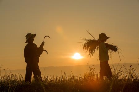 Photo pour Silhouette of children Grain harvest in the fields with sunrise background - image libre de droit