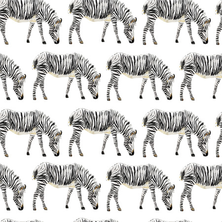 Illustration for Hand painted watercolor seamless zebra background. Vector illustration. - Royalty Free Image