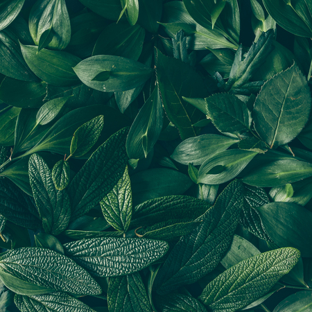 Photo for Creative layout made of green leaves. Flat lay. Nature background - Royalty Free Image