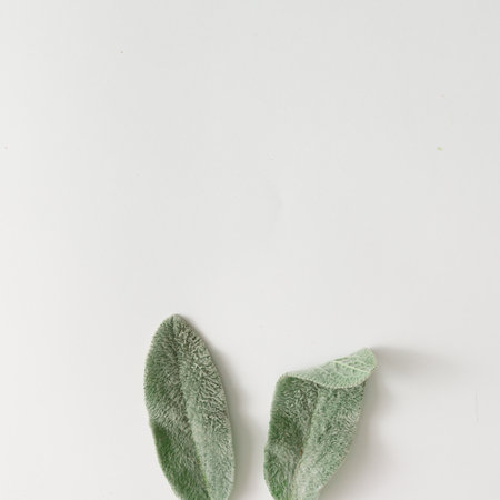 Photo for Bunny ears made of lambs ears plant leaves. Flat lay. - Royalty Free Image