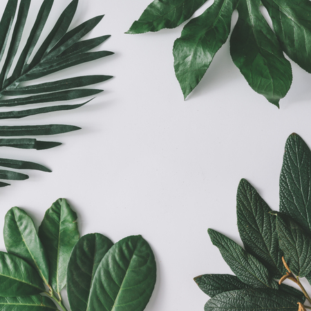 Photo pour Creative minimal arrangement of leaves on bright white background. Flat lay. Nature concept. - image libre de droit