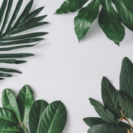 Foto de Creative minimal arrangement of leaves on bright white background. Flat lay. Nature concept. - Imagen libre de derechos