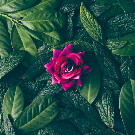 Photo for Creative layout made of green leaves and purple flower. Flat lay. Nature concept - Royalty Free Image