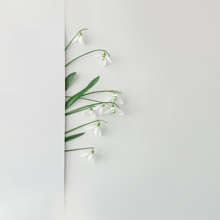 Photo pour Creative layout made with snowdrop flowers on bright background. Flat lay. Spring minimal concept. - image libre de droit