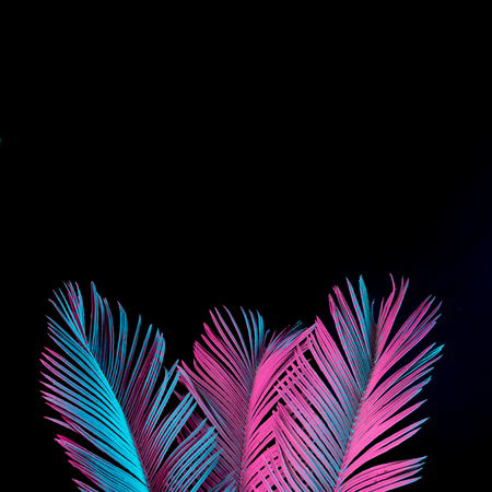 Foto de Tropical and palm leaves in vibrant bold gradient holographic neon  colors. Concept art. Minimal surrealism background. - Imagen libre de derechos