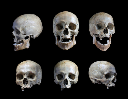 Photo pour Skull of the person on a black background - image libre de droit