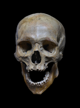 Foto de Skull of the human on a black background. - Imagen libre de derechos