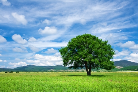 Photo pour Tree on green meadow - image libre de droit