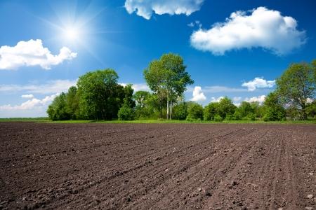 Photo pour Farm field - image libre de droit