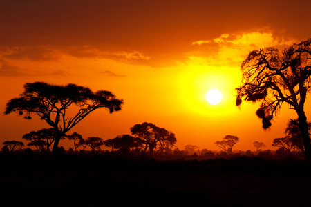 Photo pour Typical african sunset with acacia trees in Masai Mara, Kenya - image libre de droit