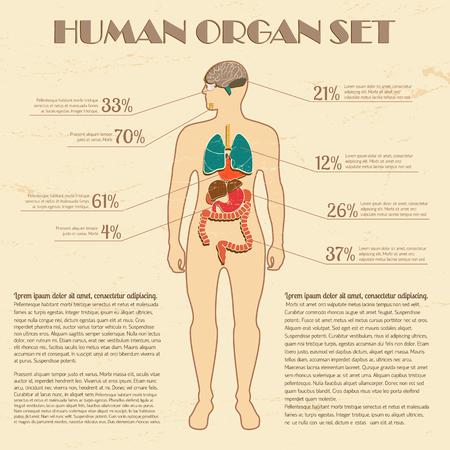 Photo pour Medical infographic set with human silhouette and internal organs vector Illustration - image libre de droit