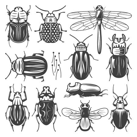 Vintage insects collection with fly dragonfly and different types of bugs and beetles isolated vector illustration