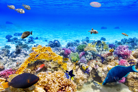 Photo for Wonderful and beautiful underwater world with corals and tropical fish. - Royalty Free Image