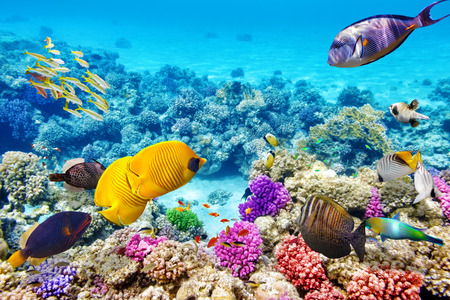Foto de Wonderful and beautiful underwater world with corals and tropical fish. - Imagen libre de derechos