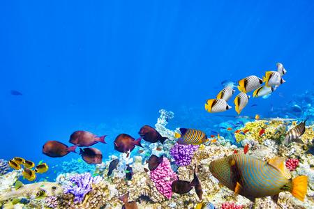 Foto de Wonderful and beautiful underwater world with corals and tropical fish. - Imagen libre de derechos