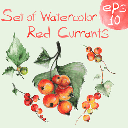 Set of watercolor red currants for art design or pattern. Set of design elements