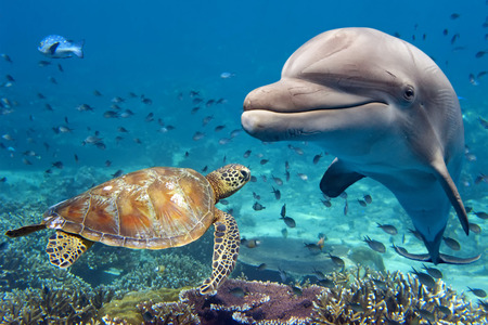 Photo for dolphin and turtle underwater on reef background looking at you - Royalty Free Image
