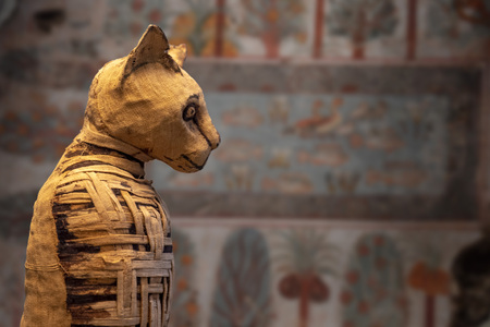 Photo for old egyptian mummy cat close up detail - Royalty Free Image